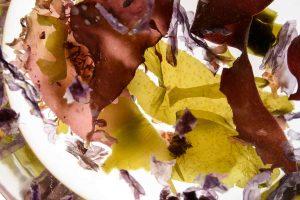 Ein Gemüse mit langer Tradition – warum Algen essen seit Jahrtausenden beliebt ist
