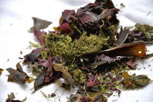 Algen als pflanzliche Quelle für Vitamin B12