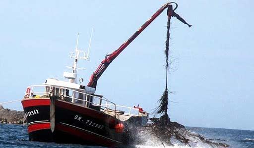 Foto der Algenernte in Frankreich durch ein Schiff